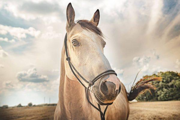 kolagén pre kone