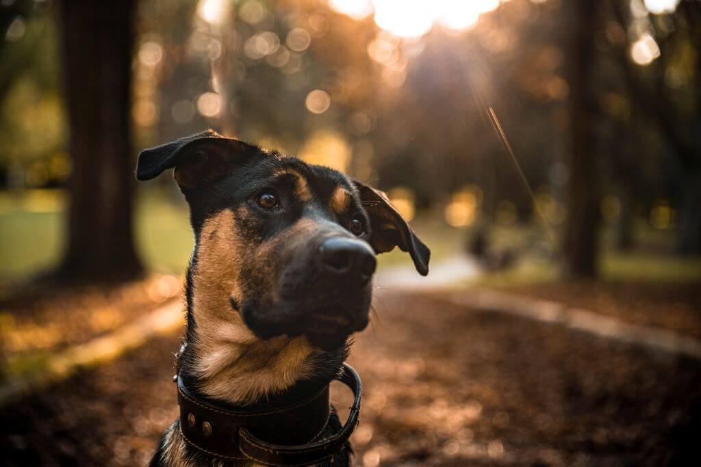 kĺbová výživa pre psy