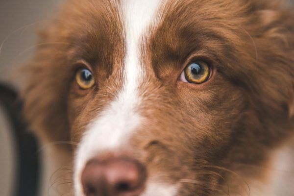 najlepší kolagén pre psy